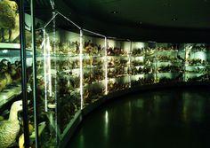 Almacén visitable del Museo de Ciencias Naturales de Madrid.