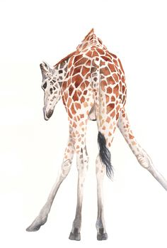 Baby Giraffe Painting // print of watercolor painting  #baby #giraffe #painting