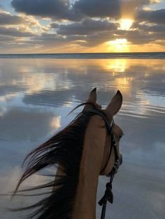 - Horse - Jennifer Stevenson in As Seen Through Horses' Ears. Sunday arvo ride on Cable Be. Jennifer Stevenson in As Seen Through Horses' Ears. Sunday arvo ride on Cable Beach, Western Australia.so lucky to have this at our back door 😍😍. Cute Horses, Pretty Horses, Horse Love, Beautiful Horses, Animals Beautiful, Beautiful Beautiful, Animals And Pets, Funny Animals, Cute Animals