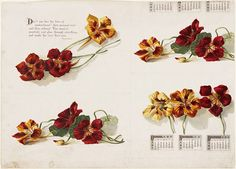 Calendar decorated with nasturtiums from the Boston Public Library, 1861-1897. Via Wikimedia Commons.