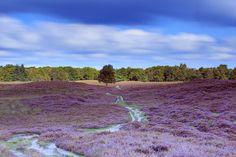 Gasterse Duinen, Drenthe The Netherlands