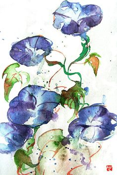 Watercolor: Morning-glory by *muttiy on deviantART