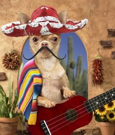 Cinco de Mayo Dog -- I can play a little music on the guitar if you'd like!