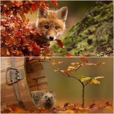 Animals that enjoyed the magical autumn