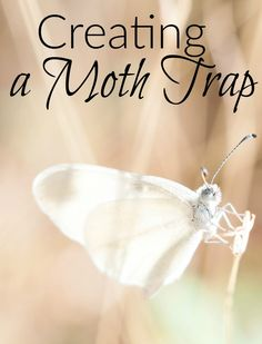 Creating a Moth Trap. Get rid of the moths in your house with this frugal method. Best Pest Control, Pest Control Services, Bug Control, Moths In House, Getting Rid Of Moths, Little House Living, Natural Pesticides, Bees And Wasps, Organic Soil