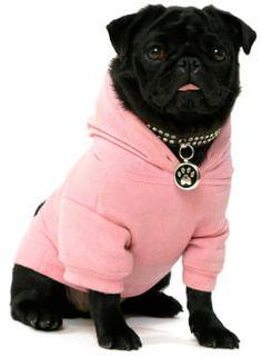 pug-wearing-pink-hoodie.jpg (272×371)