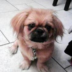 Little dog!!