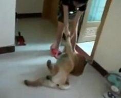 ¡Un perro se hace el muerto para que no le bañen!