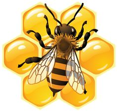 Vector bee and honeycombs Vector Clipart Royalty Free. Vector bee and honeycombs clip art vector EPS illustrations and images available to search from thousands of stock illustrators. Honey Logo, Bee Pictures, Bee Images, Buzz Bee, Frida Art, I Love Bees, Bees And Wasps, Bee Art, Bee Crafts