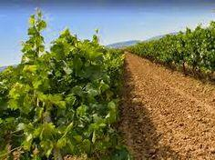 compra-vino.com Blog: Los vinos de El Levante