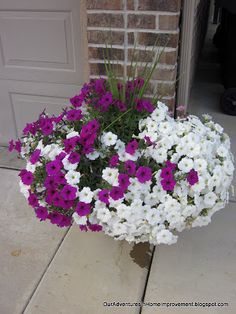 Our Adventures in Home Improvement: Doing the Wave with Petunias