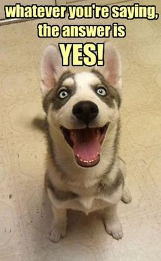 Funny dog pic! The answer is yes!