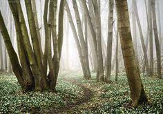 Follow Me Into Spring by Kilian Schönberger