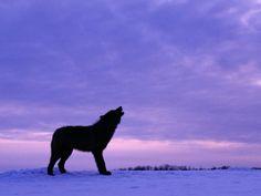 ~ Wolves, the Fierce & Beautiful ~