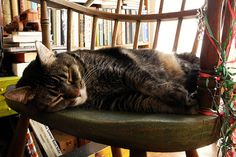 the five hour cat nap (omoo/flickr)