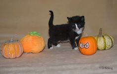 ~Tails from the Foster Kittens~: Naming Day for the kittens