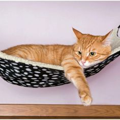 catycat21