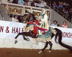 Cynimar Farms :: Arabian Horses, Stallions, Farms, Arabians, Horses For Sale - Arabian Horse Network Arabian Horse Costume, Horse Costumes, Arabian Horses, Arabian Costumes, Pretty Horses, Beautiful Horses, Freedom Images, Horse Information, Horse Ears