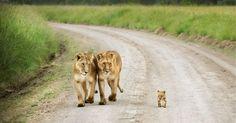 Cutest-Parenting-Moments-Animal-Kingdom-2