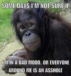 Funny Animal Jokes, Funny Animals, Funny Jokes, Hilarious, Funny Monkey Memes, Monkey Humor, Animal Humor, Work Memes, Work Humor
