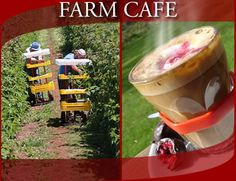 Christmas Hills Raspberry Farm Cafe | Tasmania | Australia | Cafe & Raspberry Farm