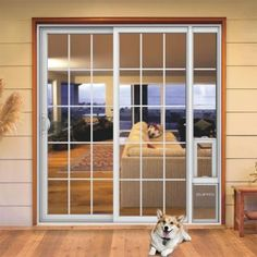 Pet Door Guys Quot In The Glass Quot Pet Doors For Dogs