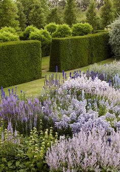 Kingham Hill House, Kingham When the present owners bought it, Kingham Hill House was a sea of brambles and ground elder. Now, however, it is a haven of foxgloves, delphiniums, topiary, wisteria and Japanese maples.