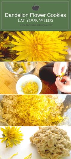 The best cookies you've ever had! Dandelion Recipes, Edible Wild Plants, Flower Cookies, Edible Flowers, Survival, Dandelion Flower, Dandelion Wine, Eating Dandelions, Landscape Design