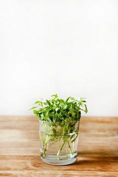 SIMPLE SNACK: Slow-Roasted Tomato, Greens   Burrata