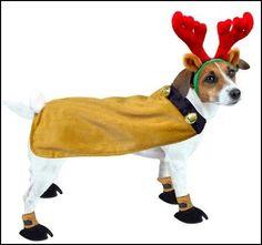 Christmas dog costumes, cute!