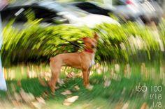 dicas de fotografia profissional efeito spinning