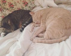 A loving owner and two sweet kitties need help