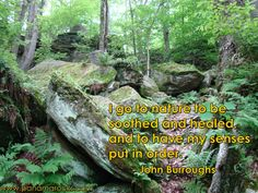 I go to nature to be soothed and healed, and to have my senses put in order.             - John Burroughs         www.panamarocks.com