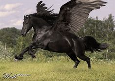 Black Pegasus. Wish this was a reality. Imagine a flock!