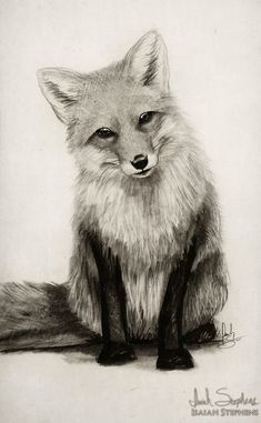 Fox Say What? by IsaiahStephens on DeviantArt