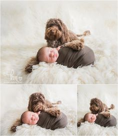 mini labradoodle and newborn baby - puppy and baby - so cute!
