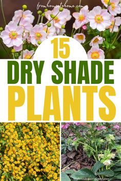 These drought-tolerant perennials and shrubs are the perfect dry shade plants for your shade garden. Whether you're looking for evergreen leaves or lots of flowers, you'll find something to add to your garden design. | Shade Perennials Shrubs For Dry Shade, Partial Shade Perennials, Shade Flowers Perennial, Dry Shade Plants, Best Perennials, Flowers Perennials, Cool Plants, Perennial Bushes, Autumn Clematis