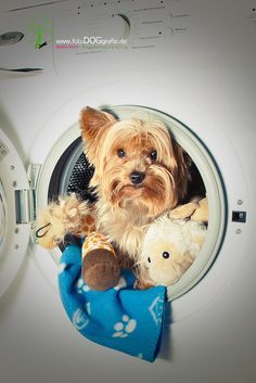 So this is where all my toys went! #dog http://www.thedogsbark.com