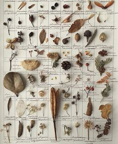 Nature school - nature collection board with the names of each collected object Botanical Art, Botanical Illustration, Botanical Drawings, Wicca, Nature Collection, Witch Aesthetic, Nature Journal, Foliage Plants, Dried Flowers