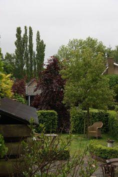 Corine Knol. Dag 6 : rood - de rode beuk achter in de tuin kleurt zo mooi bij al het frisse groen #synchroonkijken