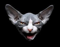 sphynx cat photography - Buscar con Google