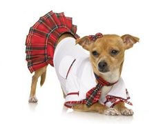 School Puppy Dog Costume $45ec Costume Includes: Shirt, Necktie, Skirt. Available Size: Small