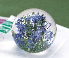 """A uniquely beautiful gift of love and remembrance. Hand-picked forget-me-nots are carefully dried using techniques that preserve their deep color, then suspended in a globe of clear, highly polished resin that preserves their smallest, most delicate detail. The flowers are collected in Margam Forest in South Wales, and the paperweights are produced in a 14th-century barn at Hafod Grange, once used by the Cistercian monks of the now ruined Margam Abbey. 2 ½"""" diameter. EXCLUSIVE"""