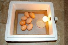 How to Make a Simple Homemade Incubator for Chicks. Raising chickens at home has become popular recently since more people have become educated about the plight of hens raised in factory farms. Hatching chickens can be a fun family. Homemade Incubator, Diy Incubator, Chicken Incubator, Cheap Chicken Coops, Chicken Coop Plans, Building A Chicken Coop, Raising Backyard Chickens, Keeping Chickens, Canard Mandarin