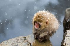 """""""A Little Monkey on a Cliff A cold front hit the Nagano prefecture. I saw a little monkey enduring the cold in Jigokudani Monkey Park. This little monkey is really cute.  This photo won the Natural World category of our 13th Annual Photo Contest. """""""