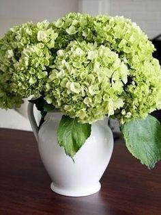 green hydrangea in white pitcher
