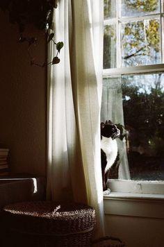♥ Cat In Window ♥