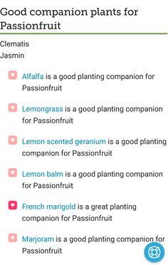 Passionfruit vine companion planting