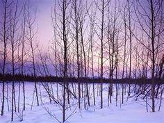 Winter Winter Trees