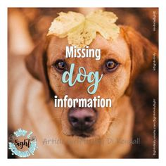 Do you know how missing dogs behave? This info will give you a better idea of their behaviour. Socializing Dogs, Dog Information, Weather Day, Purebred Dogs, Dog Runs, Dog Travel, Losing A Dog, Extreme Weather, Id Tag